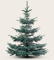 Weihnachtsbaum kaufen in heidelberg