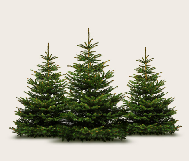Im Christbaum Center Finden Sie Ihren Perfekten Weihnachtsbaum!